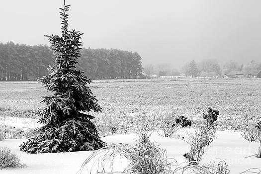 Sophie Vigneault - Frozen Winter Scenery