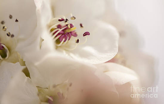 Fruit Blossom by Dee Johnson