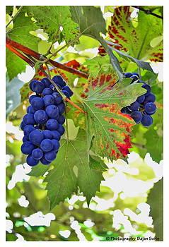 Fruit Of Autumn by Bajan Sorin