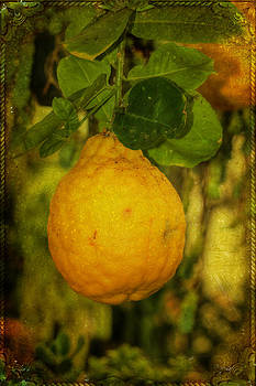 Mother Nature - Fruit Of The Lemon Tree