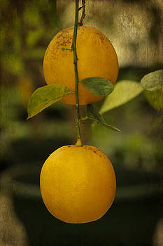 Mother Nature - Fruit Of The Orange Tree