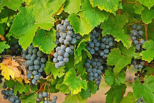 Robert Anschutz - Fruit of the Vine