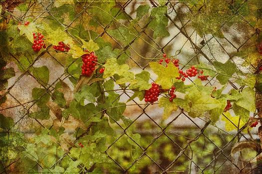 Fruit of the Vine by Joan Bertucci