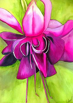 Fuchsia Macro by Sacha Grossel