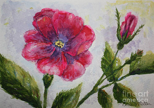 Fuchsia Rose and Bud by Terri Maddin-Miller