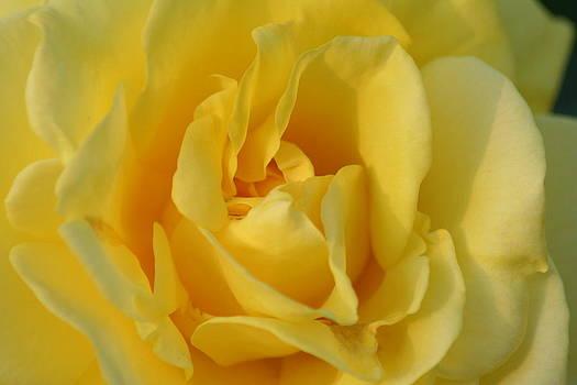 Full Bloom by Anita Parker