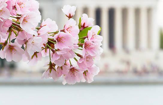 David Hahn - Full Bloom in DC
