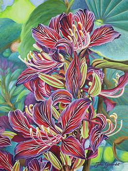 Jane Girardot - Full Blossom Orchid Tree