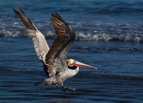 John Daly - Full Flap Takeoff