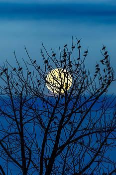 Full Moon by Bob Orsillo