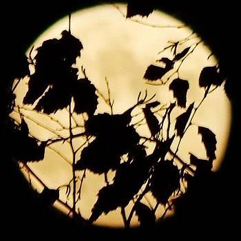 Full #moon by Brian Harris