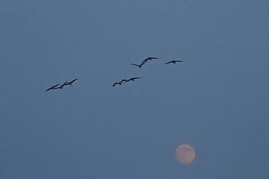 Jack R Perry - Full Moon