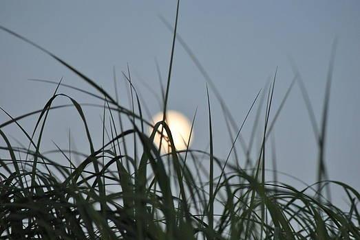 Full Moon by Jody Smith
