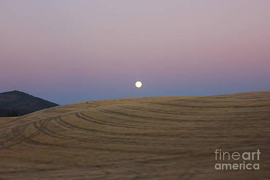 Full Moon Rising at Sunset by Linda Meyer