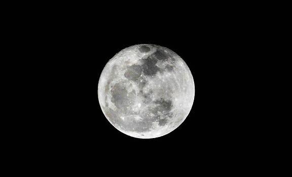 Full Moon by Shey Stitt