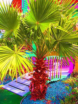 Fun Palm by Mickey Krause