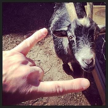 Fun With Goats. #goat #animal #hoytfarm by Craig Kempf