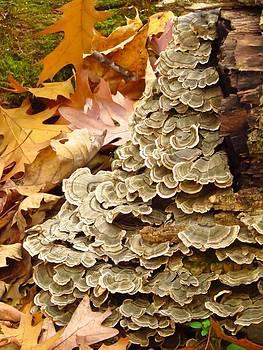Fungi Cascade by Lori Frisch