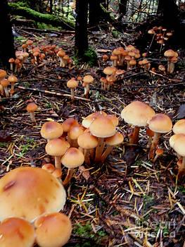 Fungi Forest by Steven Valkenberg
