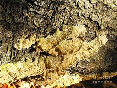Fungi Or Mushroom? by Lisa J Gifford