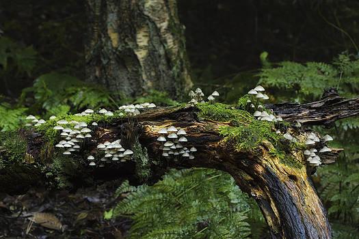 Fungus by Karl Mann
