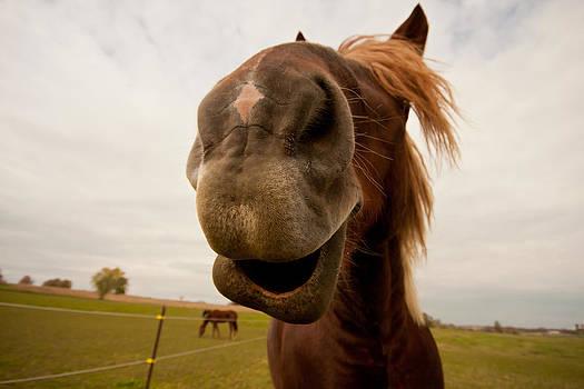 Funny Horse by Paulina Szajek