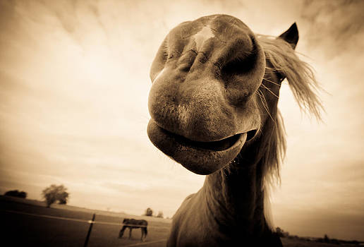 Funny Horse Sepia by Paulina Szajek