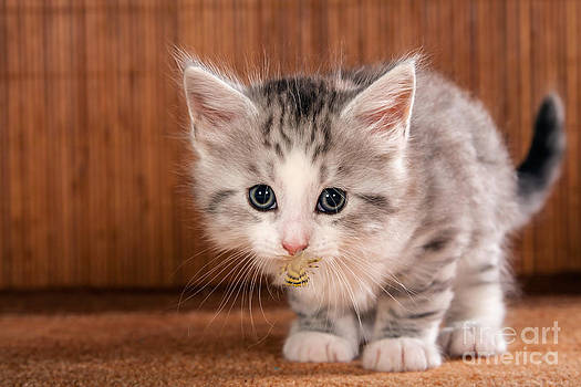 Funny Little Kitten by Doreen Zorn