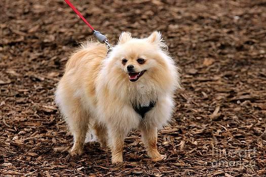 Janice Byer - Fur Ball Puppy