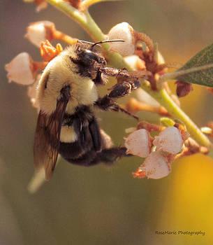 Fuzzy Bee by Vanessa Parent