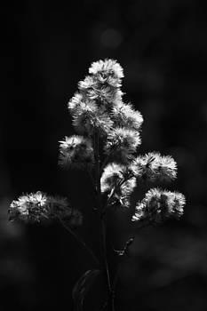 Fuzzy Twig by Larysa  Luciw