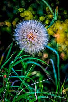Jon Burch Photography - Fuzzy Wuzzy