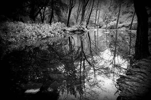 Gaea's Reflection by Mikki Cromer
