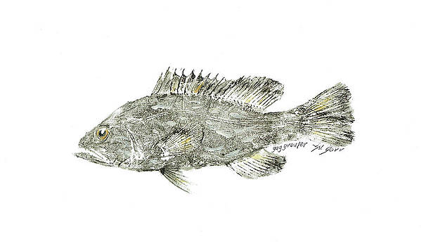 Gag Grouper by Nancy Gorr