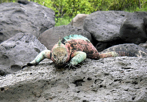 Jeff Brunton - Galapagos Islands 03