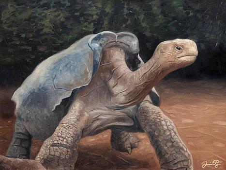 Galapagos Tortoise by Jamie Pogue