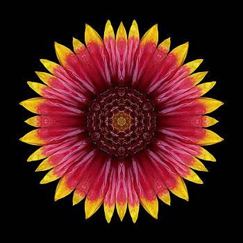 Galliardia Arizona Sun Flower Mandala by David J Bookbinder