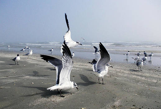 Shere Crossman - Galveston Gulls