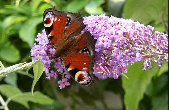 Garden beauty by Geoff Cooper