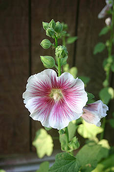 Nina Fosdick - Garden Beauty