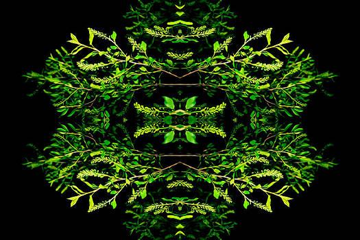 Garden Crest Variation  by Stephani Vaughan