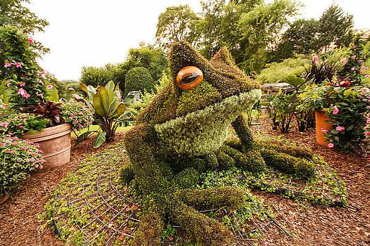 Garden Frog by Bob McGill