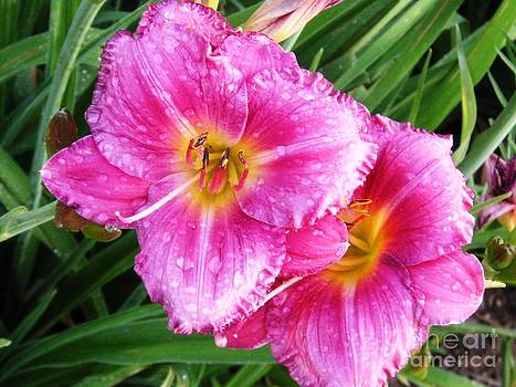 Garden Lily by Crystal Miller