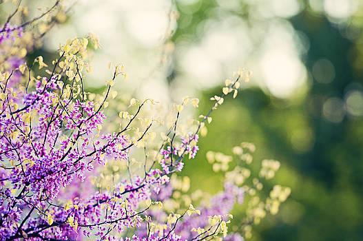 Garden Stroll by Carolyn Cochrane