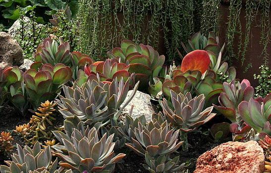 Rosanne Jordan - Garden Succulents