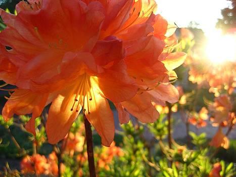 Garden Sun by Jennifer Randall