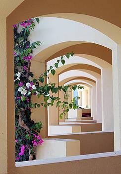 Garden View by Mo  Khalel