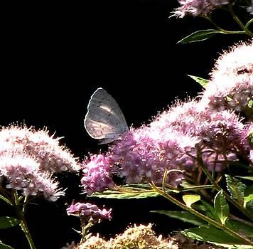 Angela Davies - Garden Visitor