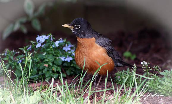 Kathy J Snow - Garden Visitor
