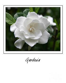 Jill Lang - Gardenia Gallery Style